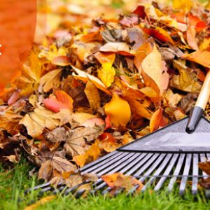 Cleaning Checklist For Fall