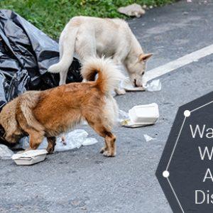 Ways To Keep Wild Animals Aways From Disposal Bins