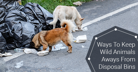 Ways To Keep Wild Animals Aways From Disposal Bins