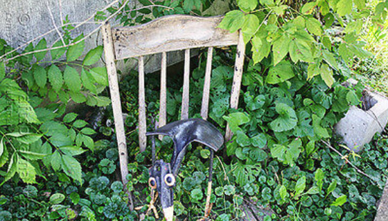 Vine Covered Chair